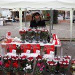 Stelle di Natale AIL Modena 2017 Cavezzo
