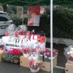 Stelle di Natale AIL Modena - Rami di Ravarino
