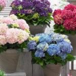 Festeggia con un fiore solidale la Festa della Mamma